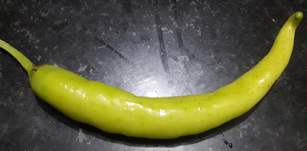 Thick Chilli Pepper