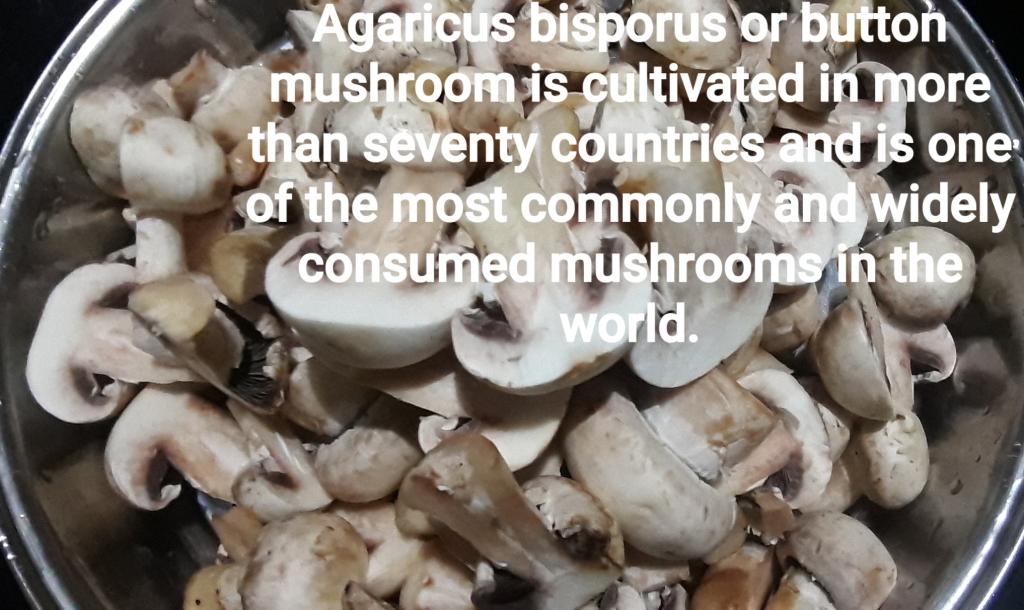 Agaricus bisporus or button mushroom