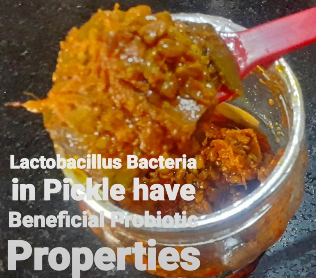 Lactobacillus Bacteria in Pickle